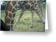 Six Flags Great Adventure - Animal Park - 121245 Greeting Card by DC Photographer
