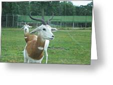 Six Flags Great Adventure - Animal Park - 121250 Greeting Card