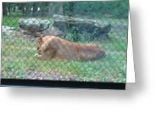 Six Flags Great Adventure - Animal Park - 121251 Greeting Card