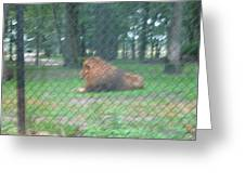 Six Flags Great Adventure - Animal Park - 121252 Greeting Card