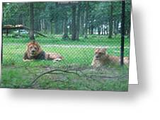 Six Flags Great Adventure - Animal Park - 121253 Greeting Card