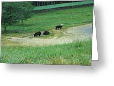 Six Flags Great Adventure - Animal Park - 121255 Greeting Card