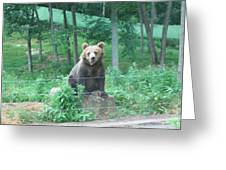 Six Flags Great Adventure - Animal Park - 121263 Greeting Card