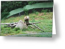 Six Flags Great Adventure - Animal Park - 121265 Greeting Card