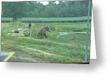 Six Flags Great Adventure - Animal Park - 121266 Greeting Card