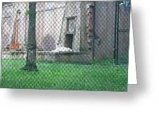 Six Flags Great Adventure - Animal Park - 121275 Greeting Card