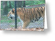 Six Flags Great Adventure - Animal Park - 121278 Greeting Card