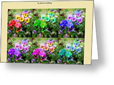 Six Pretty Pansies Greeting Card