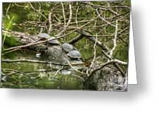 Six Turtle On A Log Greeting Card
