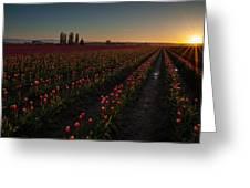 Skagit Dusk Tulip Fields Greeting Card