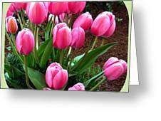 Skagit Valley Tulips 9 Greeting Card