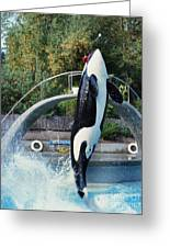 Skana Orca Vancouver Aquarium 1974 Greeting Card