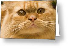 Skc 1480 Inquisitive Greeting Card