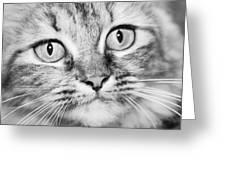 Skc 1498 Wide Eyed Greeting Card