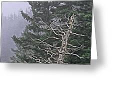 Skeletal Treescape Greeting Card