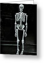 Skeleton New York City Greeting Card