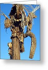 Skeleton Of A Saguaro Tree Greeting Card