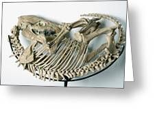Skeleton Of An Extinct Rhinoceroses Greeting Card
