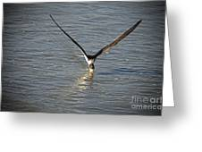 Skimmer Fishing Greeting Card