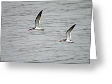 Skimmers On The Prowl Greeting Card