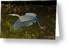 Skimming Great Heron Greeting Card