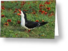 Skimming Through The Garden Greeting Card by Tony Beck