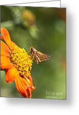 Skipper Butterfly On An Orange Flower Greeting Card