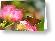 Skipper Butterfly On Mimosa Flower Greeting Card