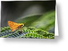 Skipper Butterfly On Mimosa Leaf Greeting Card