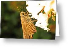 Skipper Butterfly Two Greeting Card by Walter Klockers