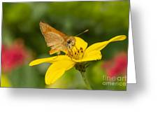 Skipper In The Flowers Greeting Card