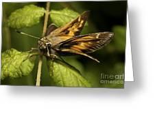 Skipper Moth Greeting Card