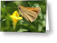 European Skipper On Bird's-foot Trefoil Greeting Card