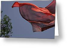 Skc 0958 Flying Saree Greeting Card