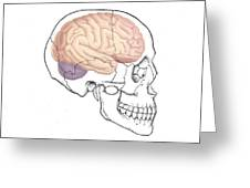 Skull And Brain Greeting Card