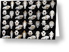 Skulls Of Various Dog Breeds Greeting Card