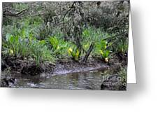 Skunk Cabbage Blooming In Washington State Forest  2 Greeting Card