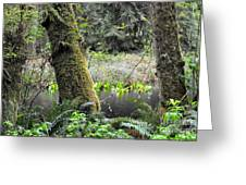 Skunk Cabbage Blooming In Washington State Forest  3 Greeting Card