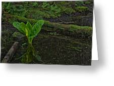 Skunk Weed Cabbage In The Pond Greeting Card