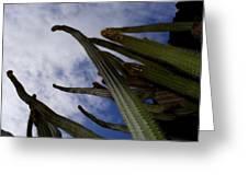 Sky Cactus Greeting Card