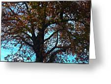 Sky Fall Greeting Card