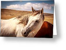 Sky Horse  Greeting Card