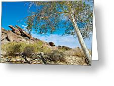 Slanted Rocks And Sycamore Tree  In Andreas Canyon In Indian Canyons-ca Greeting Card