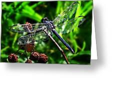 Slaty Skimmer Dragonfly Greeting Card