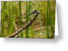 Slaty Skimmer Sunning Greeting Card
