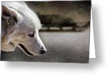 Sled Dog Greeting Card by Bob Orsillo