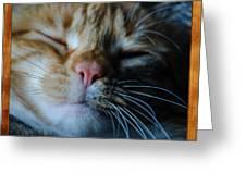 Sleeping Abby Framed Greeting Card