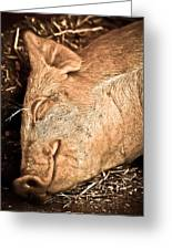 Sleeping And Smiling Pig Greeting Card
