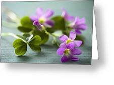 Sleeping Beauty Wild Flower Greeting Card by Jan Bickerton