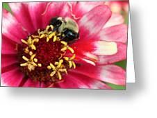 Sleeping Bumble Bee Greeting Card